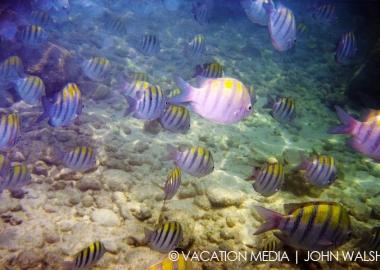 Isla Mujeres MX Diving