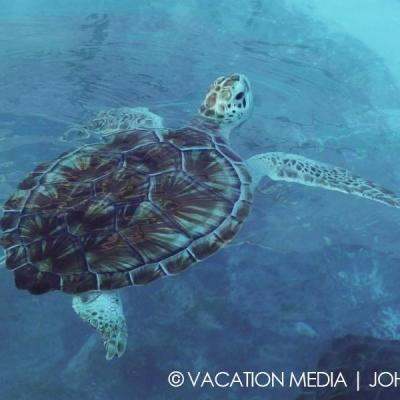 Isla Mujeres Turtles