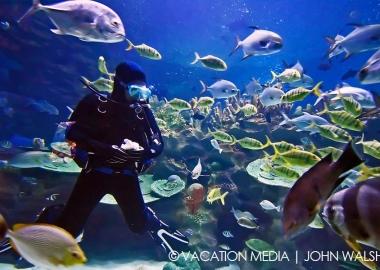 Isla Mujeres Suba Diving