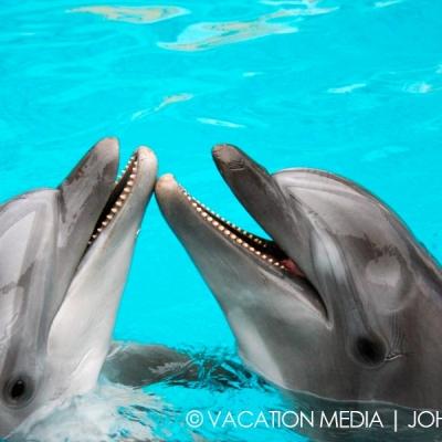Isla Mujeres Dolphin Swim